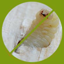 Kammerjäger Schädlingsbekämpfung Insektenbekämpfung