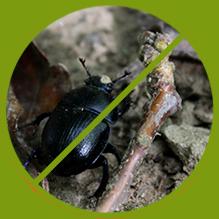 Käfer Bekämpfung